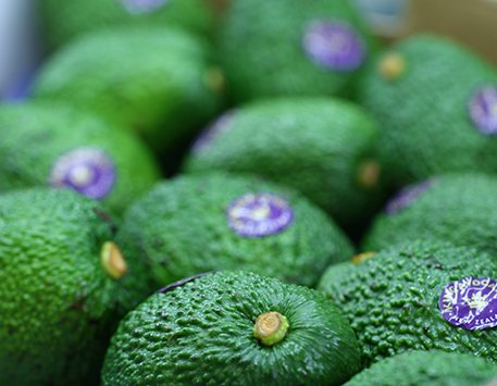 Close up of King Avocados